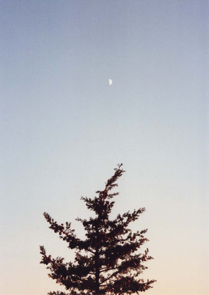 6 photography daymoon with evergreen detail