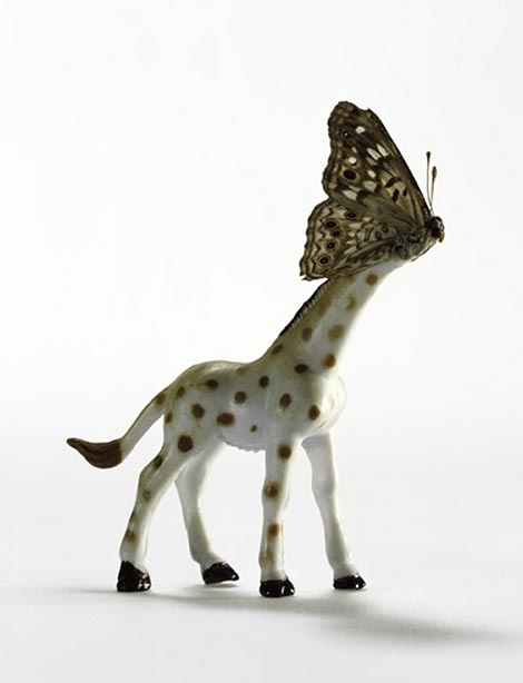 Abby goodman animal hybrid series giraffe thumb