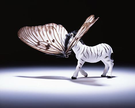Abby goodman animal hybrid series zebrafly thumb